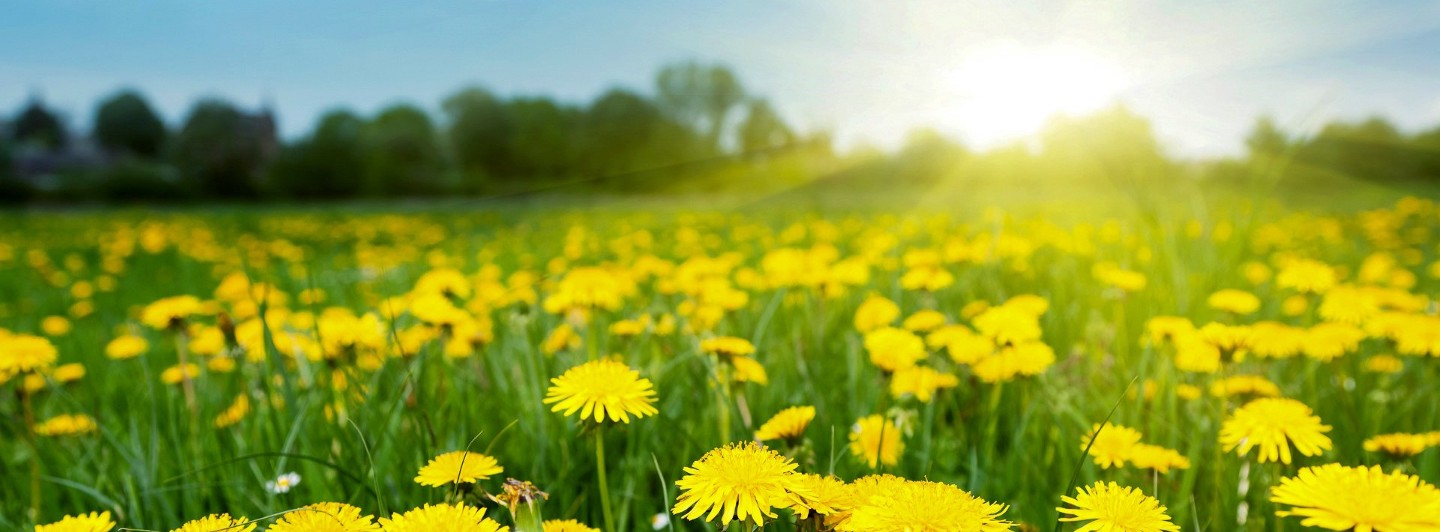 Dandelions, and a Bright Future for Bitcoin Privacy