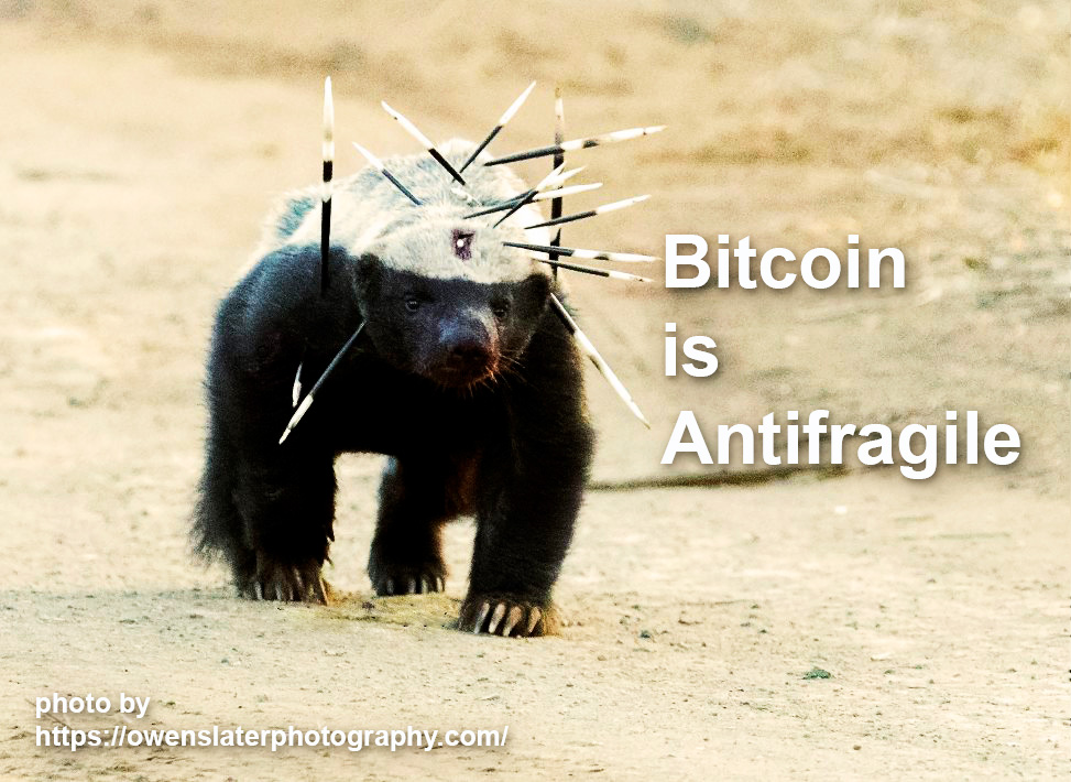 Bitcoin is Antifragile