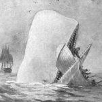 whale-696×642